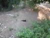 В первый же вечер увидели черную кошку в Турции