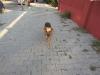 ...и собаку