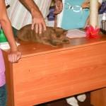 Некоторые коты очень злились, когда их щупал Даниэль