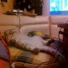 Уморительная фотка Дарси в стиле гопокот
