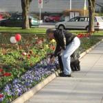 Люди приходят и втыкают гвоздички (если кто разбирается в цветах, то заметьте, что в таком месте гвоздички не растут сами). Когда стоял солдат, каждое 9 мая вся площадка была в гвоздичках красных и других цветах.